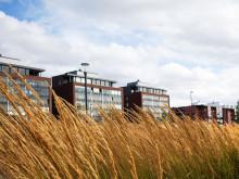 Syksyiset heinänkorret huojuvat tuulessa Jyväskylän satamassa